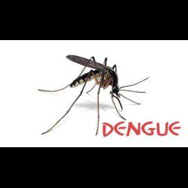 Dengue: Mecanismos que Permitem não Desenvolver os Sintomas após uma infecção pelo vírus