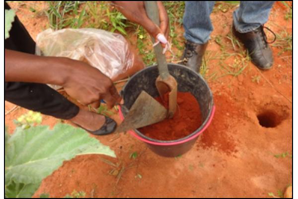 Instituições Angolanas Estudam a Fertilidade dos Solos Predominantes em Angola
