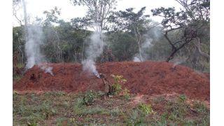Impacto da produção emergente de carvão nas florestas de Miombo do planalto de Chitembo, Centro-Sul, Angola