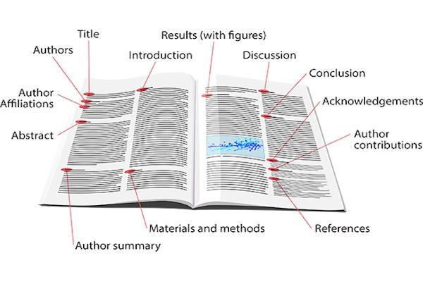 Divulgue o seu Artigo Científico no Portal Ciencia.ao