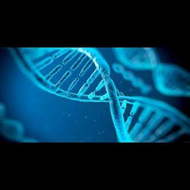 Já é possível obter ADN de um cabelo sem raiz
