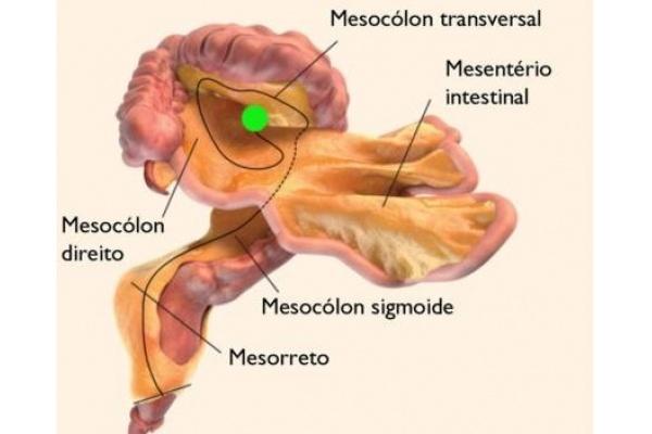 Mesentério: o Novo Órgão do Corpo Humano